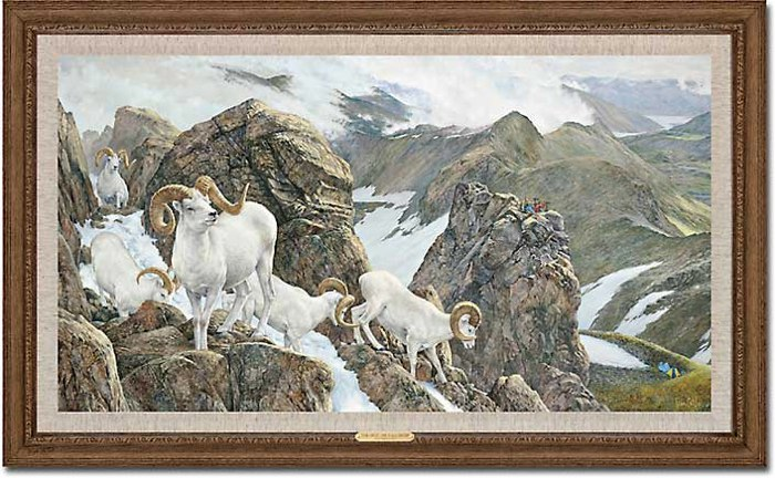 The High Life - Dall Sheep